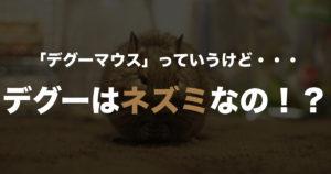 「デグーマウス」っていうけど、デグーはネズミなの?【2017/04/21追記】