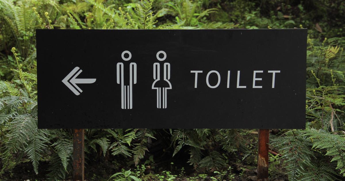 デグーのトイレ事情について徹底解説