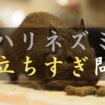 ハリネズミ、目立ちすぎ問題!デグーの良さをもっと知ってください\(^o^)/