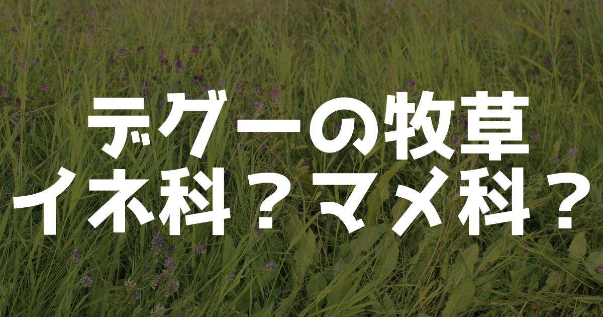 デグー用の牧草、アルファルファとチモシーの違いは?イネ科やマメ科の違いは?