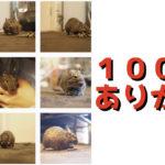 【祝】ブログ投稿数が100件を突破しました!