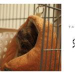 眠る姿が可愛すぎる!SANKOのリスハムフードベッドがオススメ