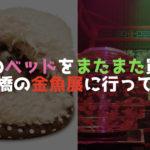 デグーのベッドをまたまた買った!&日本橋の金魚展に行ってきたよ!