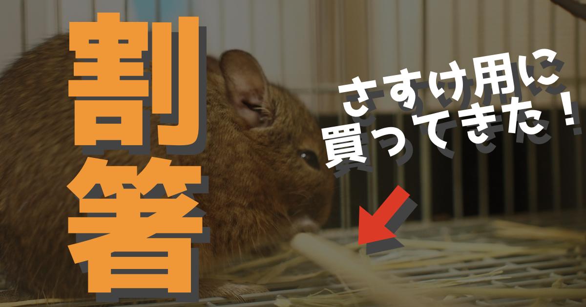 【飼育用品】100均で買える割り箸が大好きすぎる!?デグーの噛み木に、割り箸。