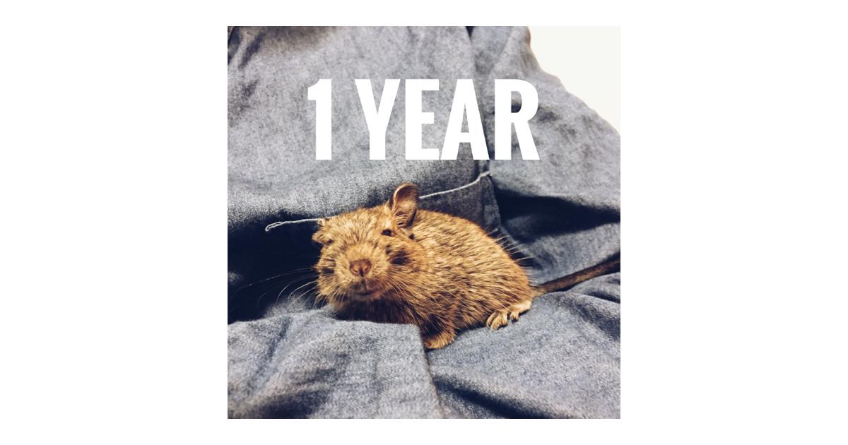 【ご報告】本日でさすけを我が家にお迎えしてから、1年がたちました!【あっという間】