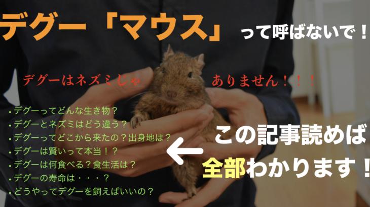 デグーマウスって呼ばないで!デグーとは?特徴を細かく解説します【ネズミではない】