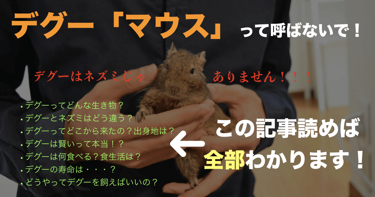 【徹底解説】デグーマウスという呼び方は誤り!デグーはどんな動物?