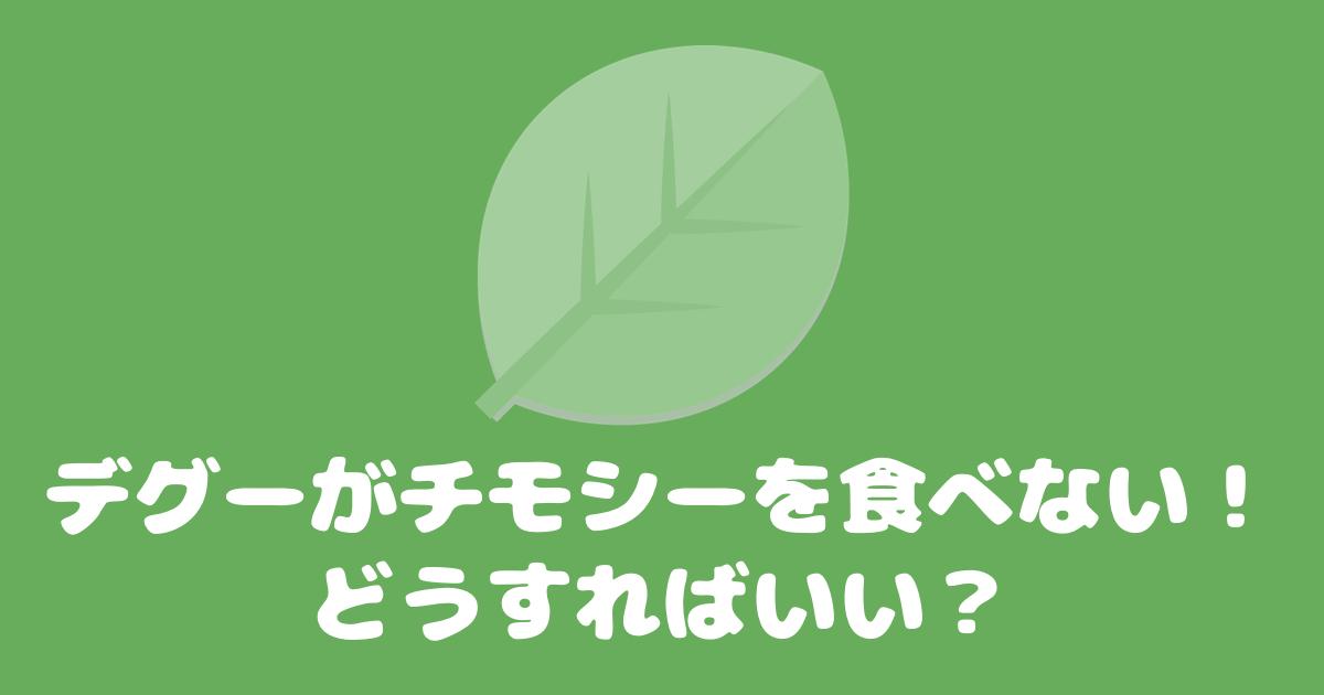 【牧草】デグーがチモシーを食べない!どうすればいい?【チモシー】