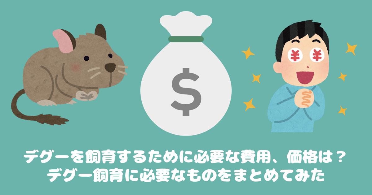 【飼育用品】デグーを飼育するために必要な費用、価格は?デグー飼育に必要なものをまとめてみた
