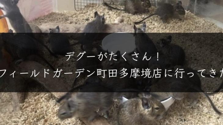 フィールドガーデン町田多摩境店に行ってきた!たくさんのデグーがいて衝撃
