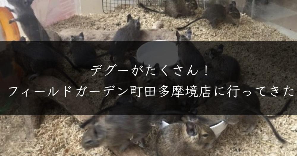 デグーの聖地「フィールドガーデン町田多摩境店を徹底解説【デグー牧場】