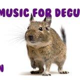 デグーが落ち着く魔法の音楽!?実際に効果があったとコメントが多数あるが真偽のほどは・・・?